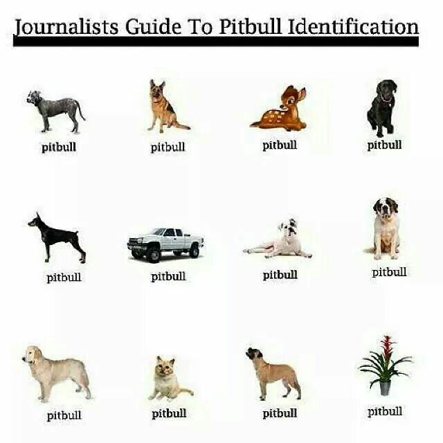 Pit Bull Identification